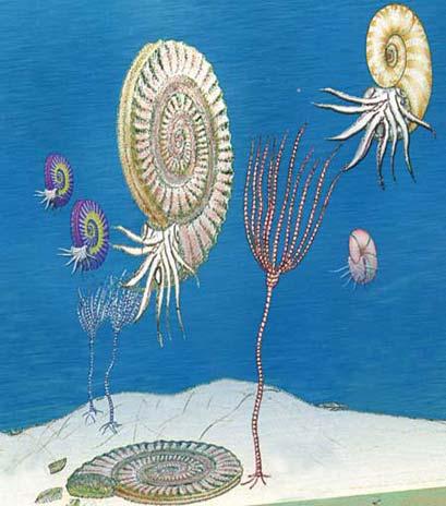 Fondale marino con gli ammoniti e altro (disegno)