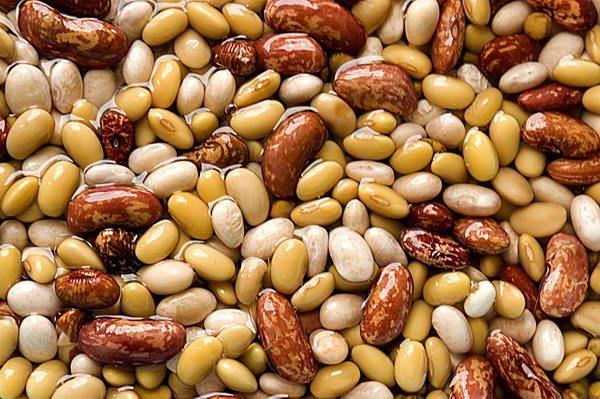 I fagioli di Cave di Foligno [una immagine tratta da tuttoggi.info, 20 ottobre 2007]