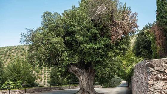 Leccio (1) – Trevi, convento dei Cappuccini (cimitero)