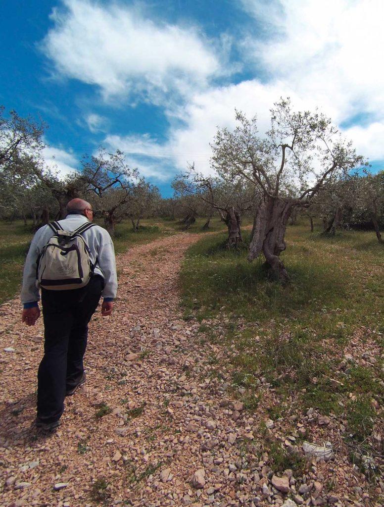 Incontri,con l'olivo che cammina