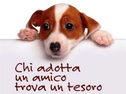 Adotta un cane - immagine scaricata dal sito del Comune di Trevi